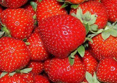 Elsanta vrucht (1)