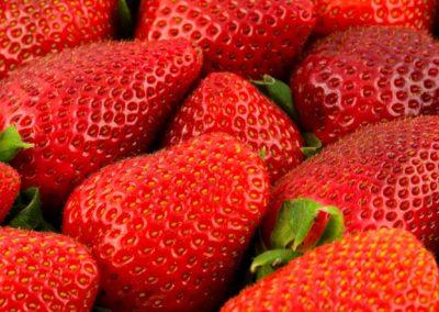 tenira vrucht (1)